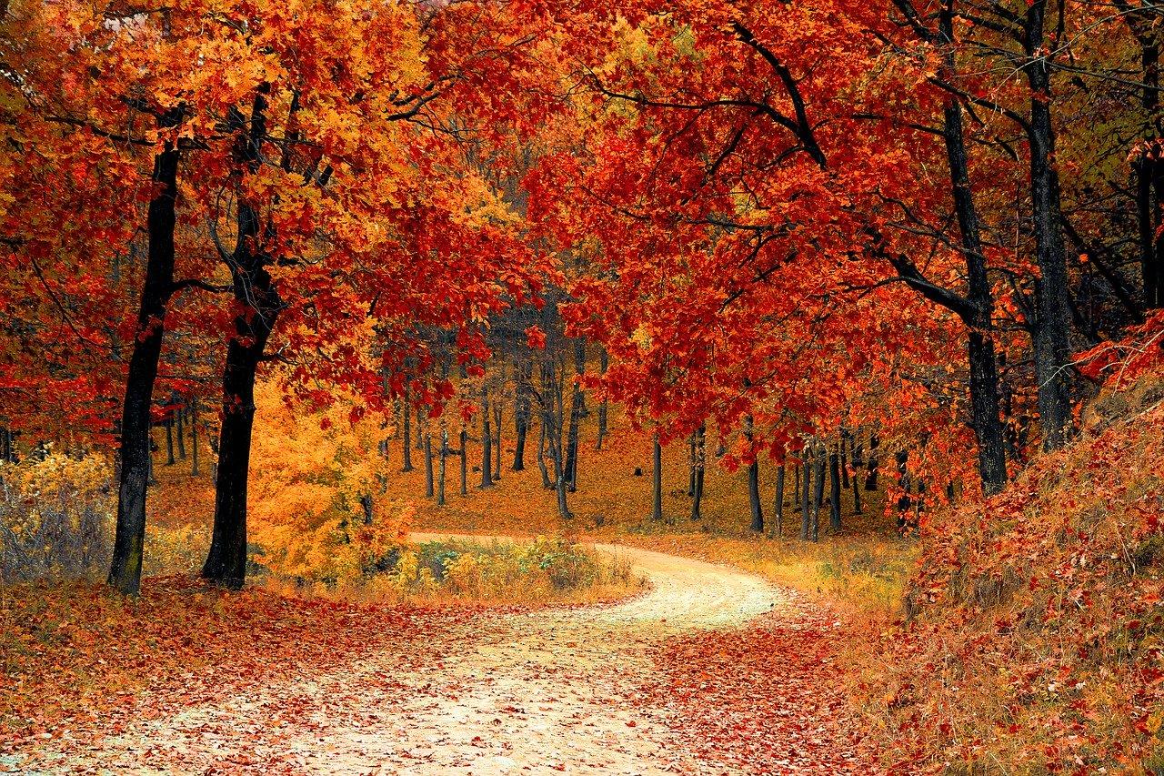 Drie tips om de herfst te overleven